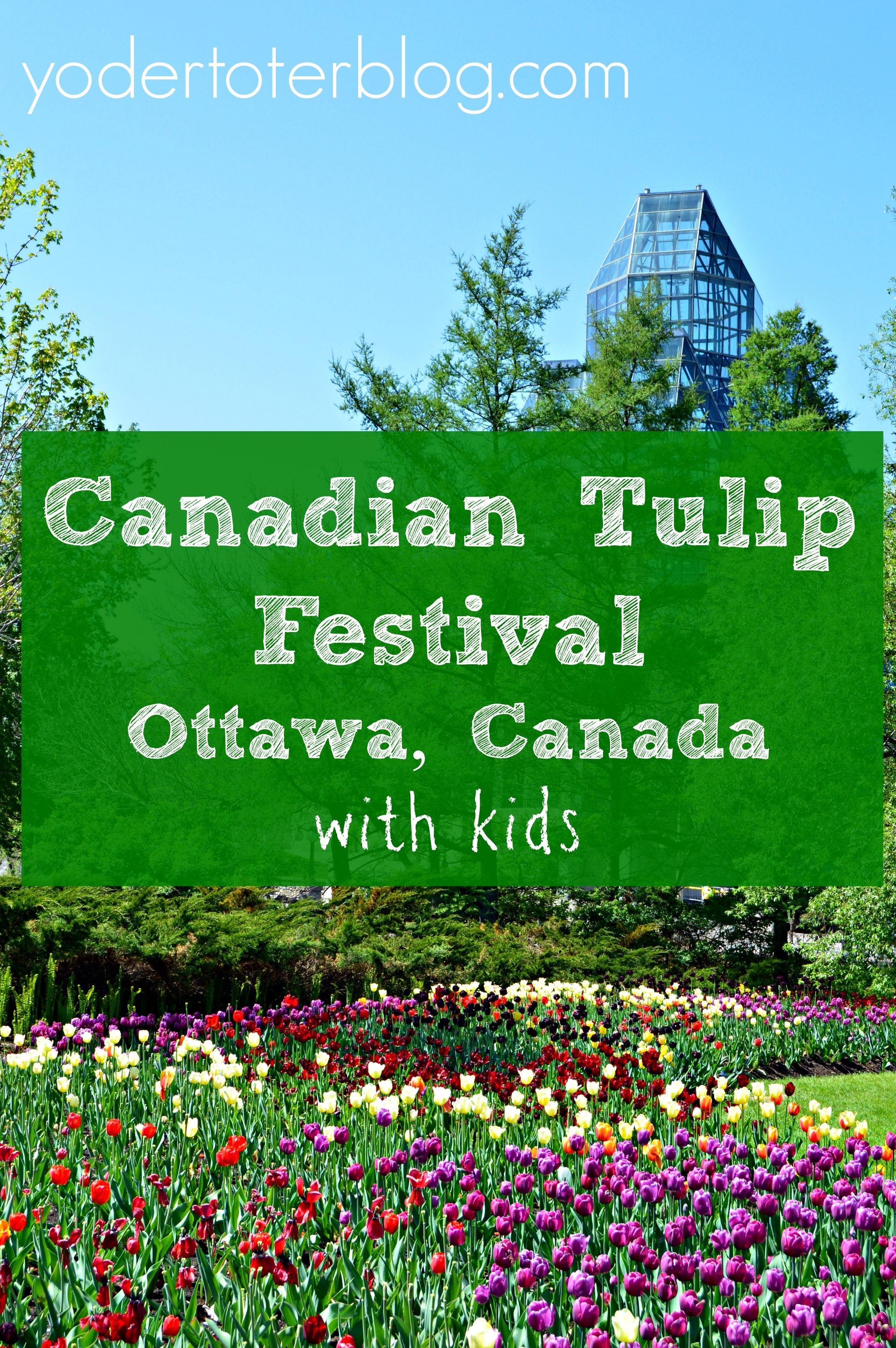 header-tulip-fest