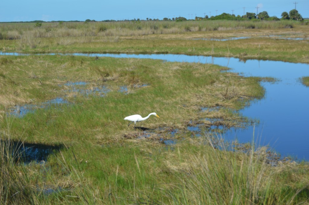 Wildlife Encounters Southwest Florida - Enjoy seeing numerous birds and alligators on an Everglades airboat tour.  Just a short drive from the beaches of Fort Myers