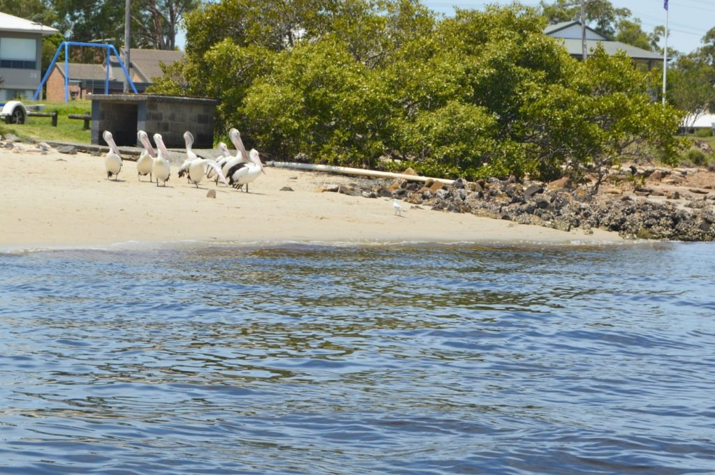 Family-friendly things to do in Port Stephens- ferry from Nelson Bay to Tea Gardens