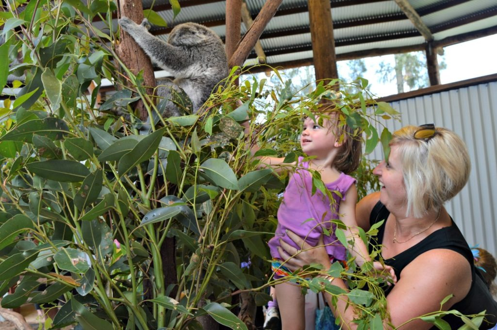 Family-friendly Port Stephens, pat a koala at Oakvale Farm