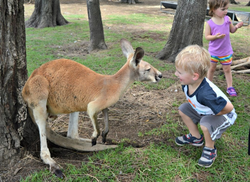 Family-friendly Port Stephens - Feed a kangaroo at Oakvale Farm
