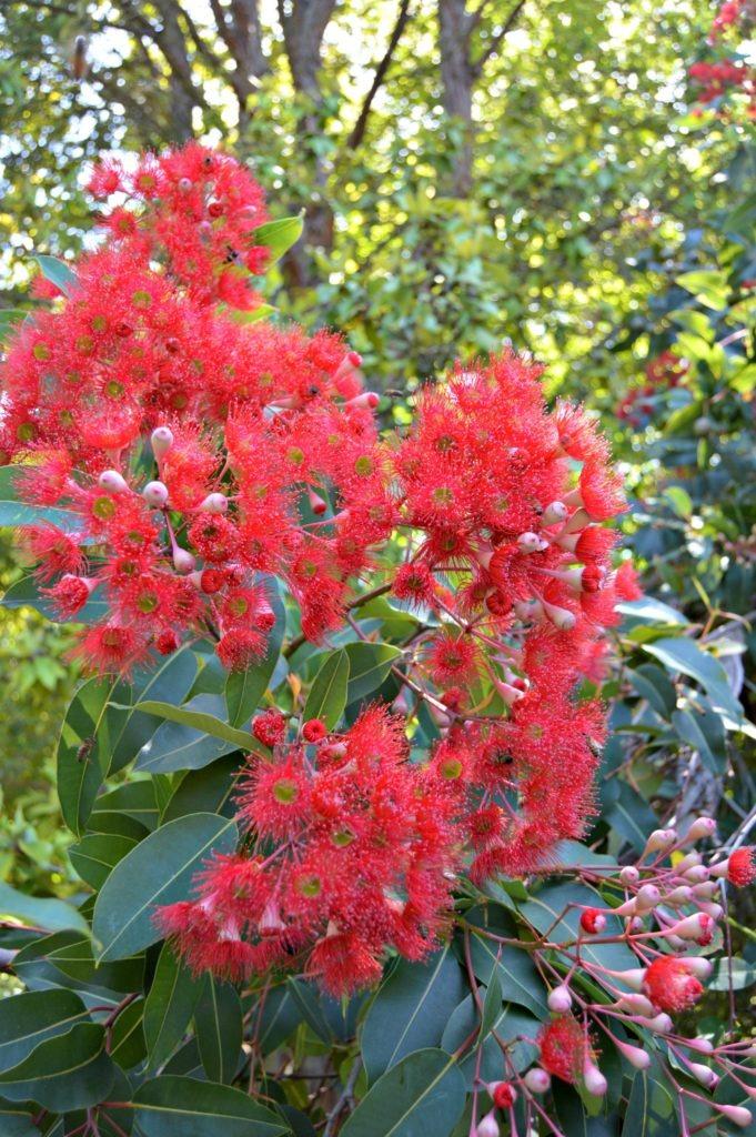Tasmanian Botanical Gardens- Free excursions from Hobart