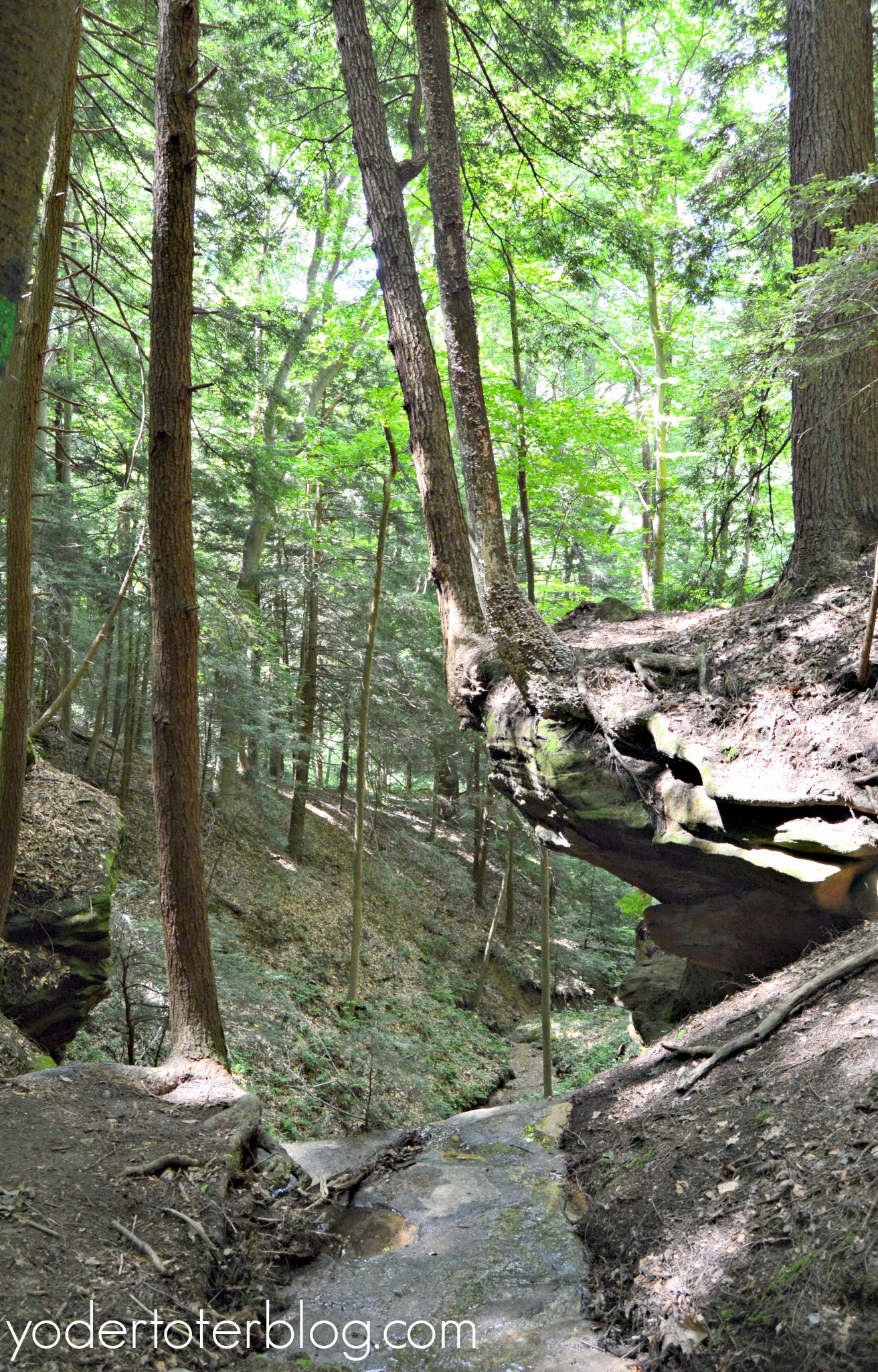 The cliffs on the Whispering Cave Trail in Hocking Hills, Ohio.  Hiking with kids on this trail requires caution.