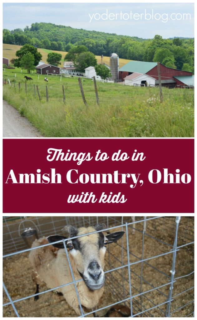 Things to do in Amish Country, Ohio with kids- The Farm at Walnut Creek- Hershberger's Farm- petting zoo opportunities- outdoor art museum- family outings Amish Country