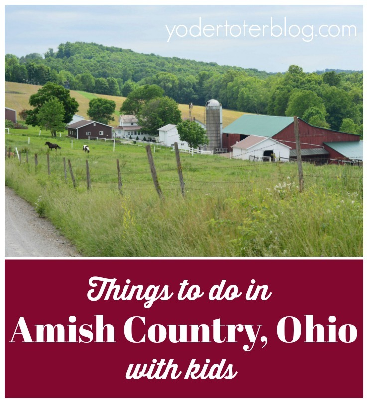 Things to do in Amish Country Ohio - Petting zoo, The Farm at Walnut Creek, kid-friendly outings in Holmes County and surrounds.