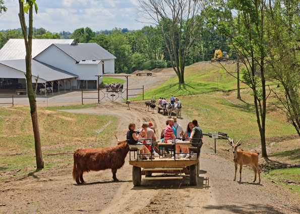 The Farm at Walnut Creek - Things to do in Amish Country, Ohio with kids - The Farm at Walnut Creek has a petting zoo plus exotic animals.
