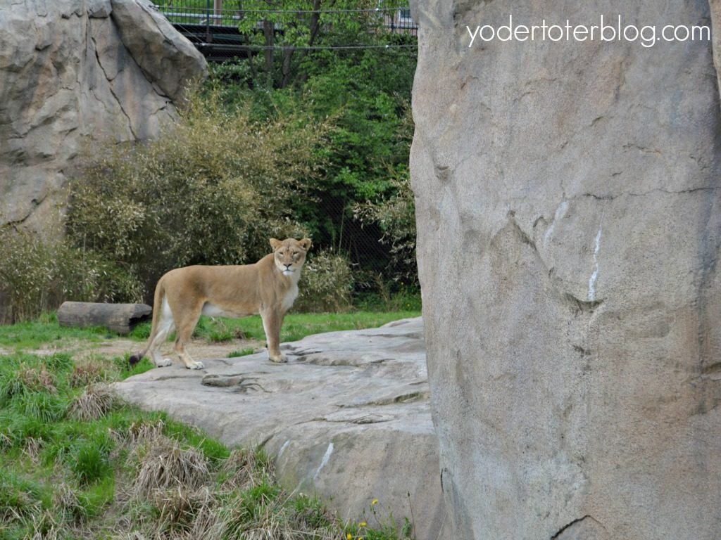 Weekend in Cincinnati, Ohio - Fun things to do in Cincinnati with the family - don't miss the Cincinnati Zoo- America's 2nd oldest zoo is full of exhibits that all ages will love.