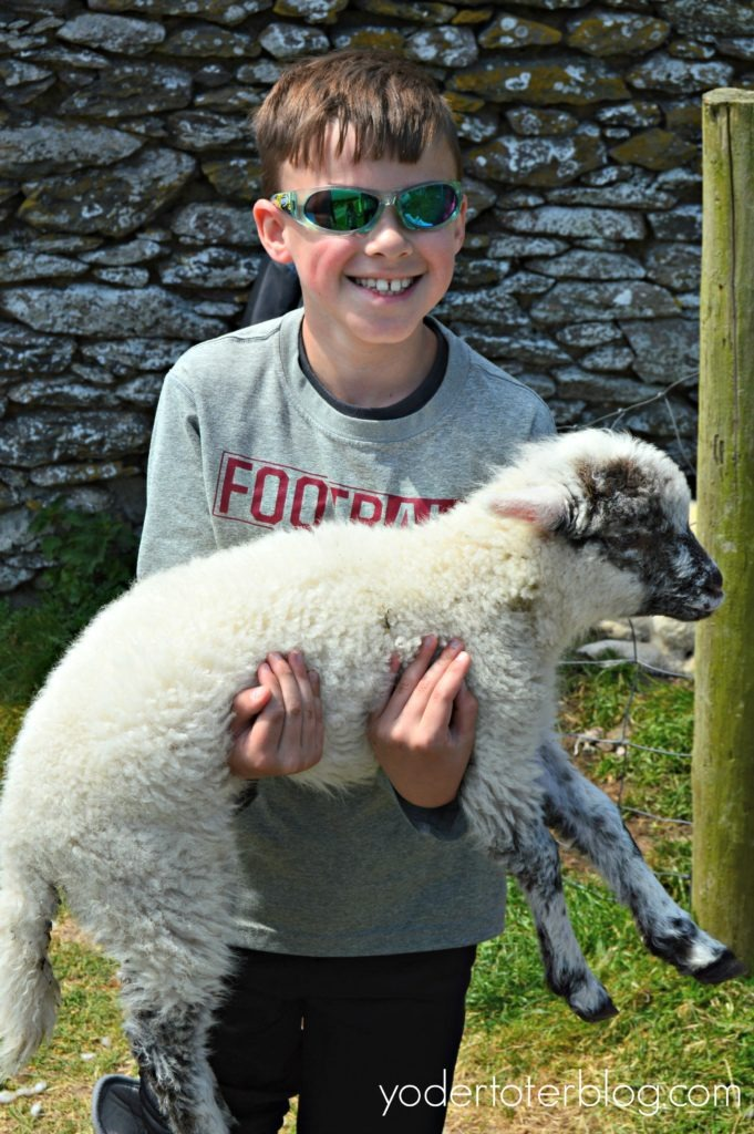One day on the Dingle Peninsula and Slea Head Drive- Hold a baby sheep at this family-friendly stop.