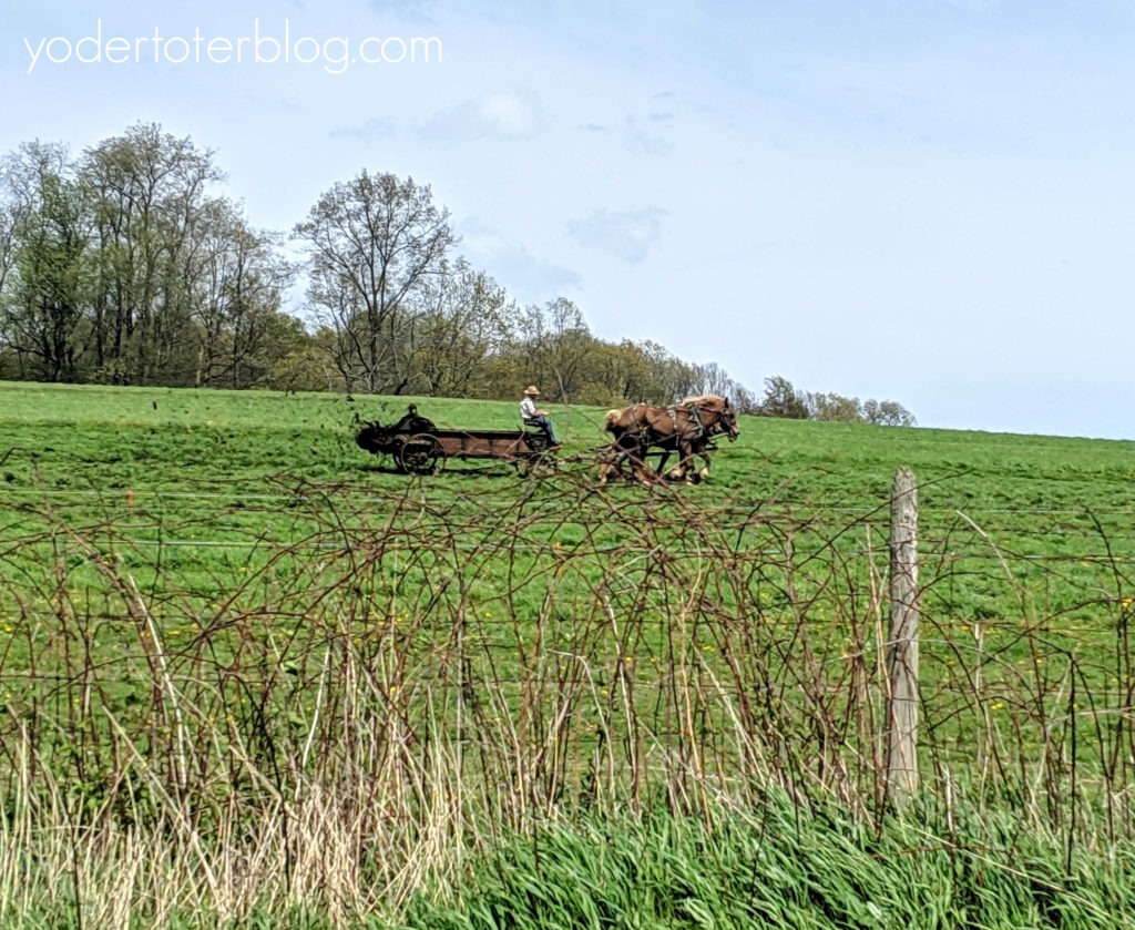 Free things to do in Amish Country, Ohio with kids.  Drive the Amish Country Byway - one of the best scenic drives to take as a family.