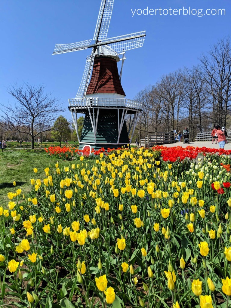 Holland Michigan Tulip Time.  Windmill Island Gardens offers plenty of photo-worthy spots.