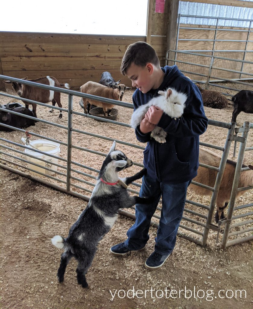 Hershberger's Farm and Bakery petting zoo area.  Visit the farm and enjoy time with the animals.  Located in Ohio's Amish Country, this attraction is sure to please visitors of all ages.