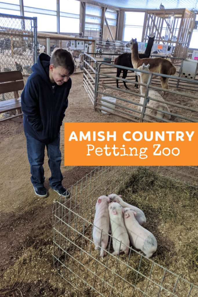 The petting zoo at Hershberger's Farm in Amish Country, Ohio is sure to delight children of all ages.  Here's what to know before your visit. Things to do in Ohio with kids. #amishcountry #ohiofindithere