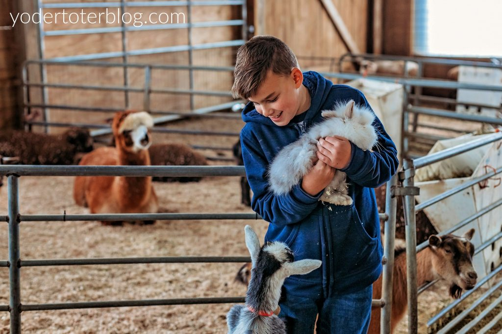 Things to do in Amish Country, Ohio with kids - things to do in Ohio - check out the petting area at Hershberger's Farm & Bakery.