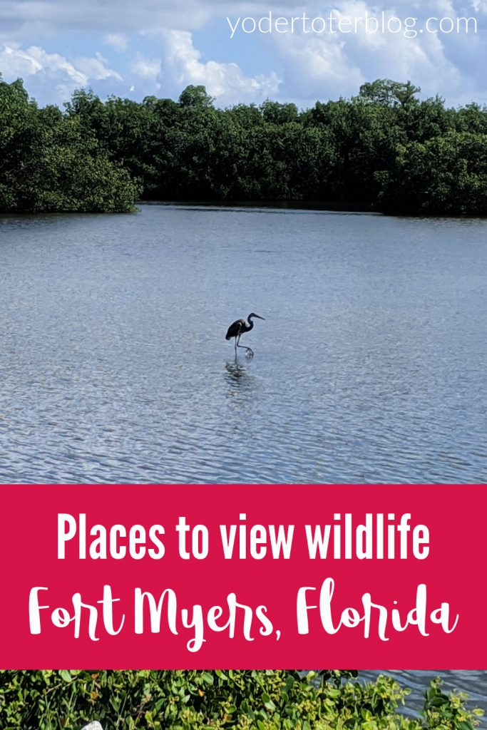 Places to view wildlife near Fort Myers, Florida.  Here are our favorite family-friendly wildlife experiences in Southwest Florida.