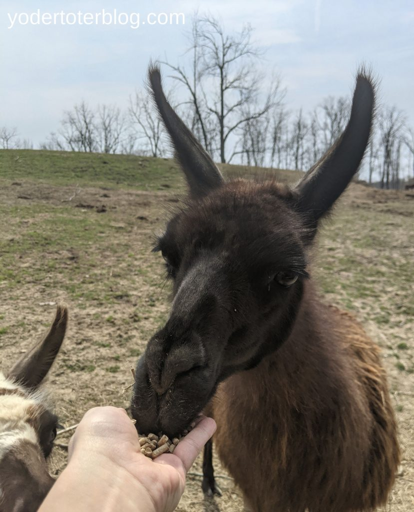 Things to do in Amish Country, Ohio with kids- family-friendly thingas to do in Ohio - The Farm at Walnut Creek